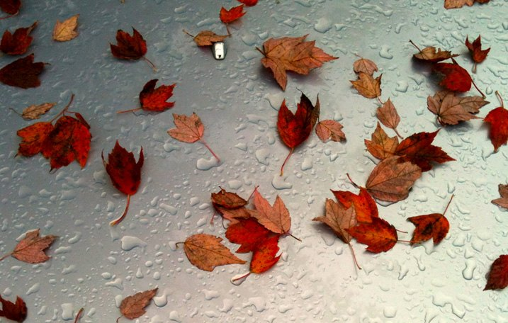 Fallen Leaves On Hood