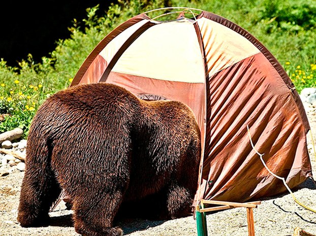 Having your automobile available for use as an adjacent retreat room can also serve as vital protection from bears wolves or other large wildlife that ... & The Five Best Reasons to Spring For an Automotive Tent