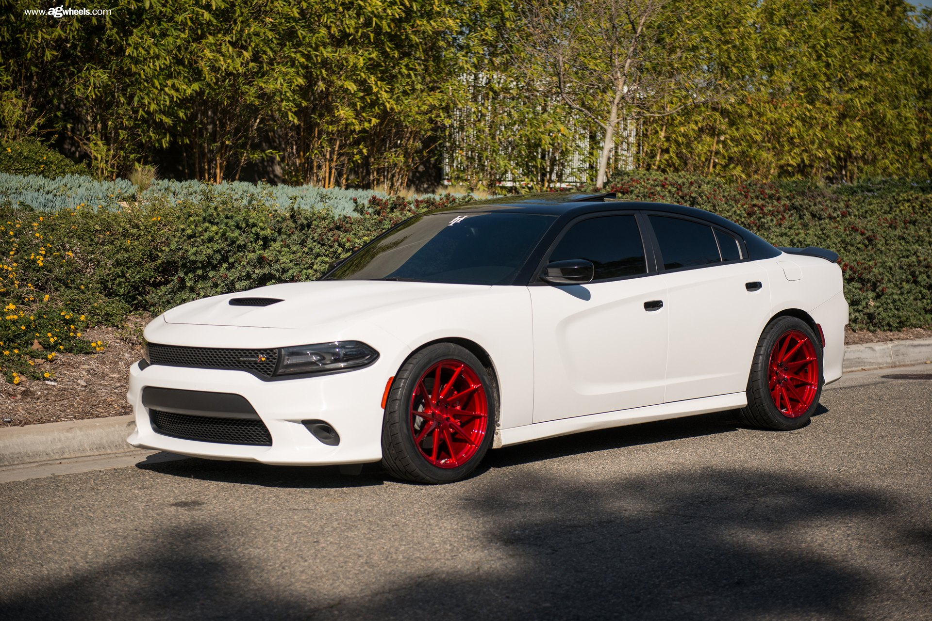 White Dodge Charger >> Stylish Warrior White Dodge Charger With Black Roof And Red Wheels