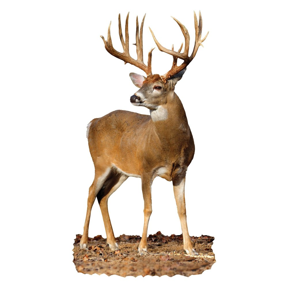 whitetail chat Purchase american whitetail tough target (40cm) at lancaster archery supply get techxpert advice online from our archery experts.