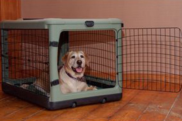 Pet Gear Pg5942bsg The Other Door 42 Sage Steel Crate With Plush Pad